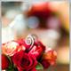 1375020631_small_thumb_41383d16f303b6902ccfa307402b8b8d