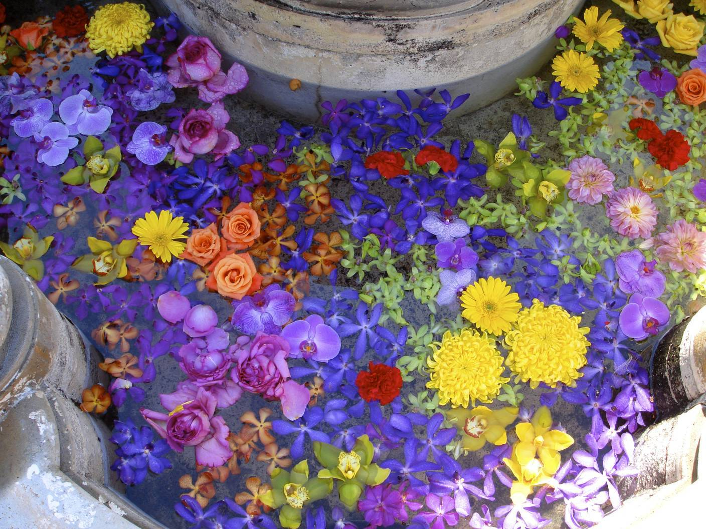 Flowers & Decor, yellow, purple, Flowers, Fountain, Colors, Bright