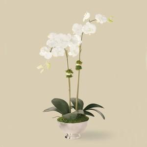 Reception, Flowers & Decor, Decor, Centerpieces, Flowers, Centerpiece, Orchid