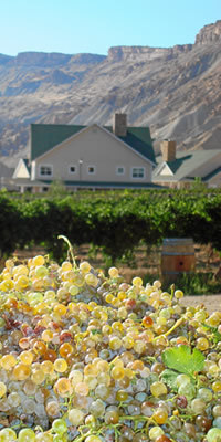 Honeymoon, Flowers & Decor, Destinations, Honeymoons, Vineyard, Colorado wine country inn, Cottage