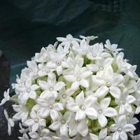 Flowers & Decor, white, Bride Bouquets, Flowers, Bouquet, Bridal