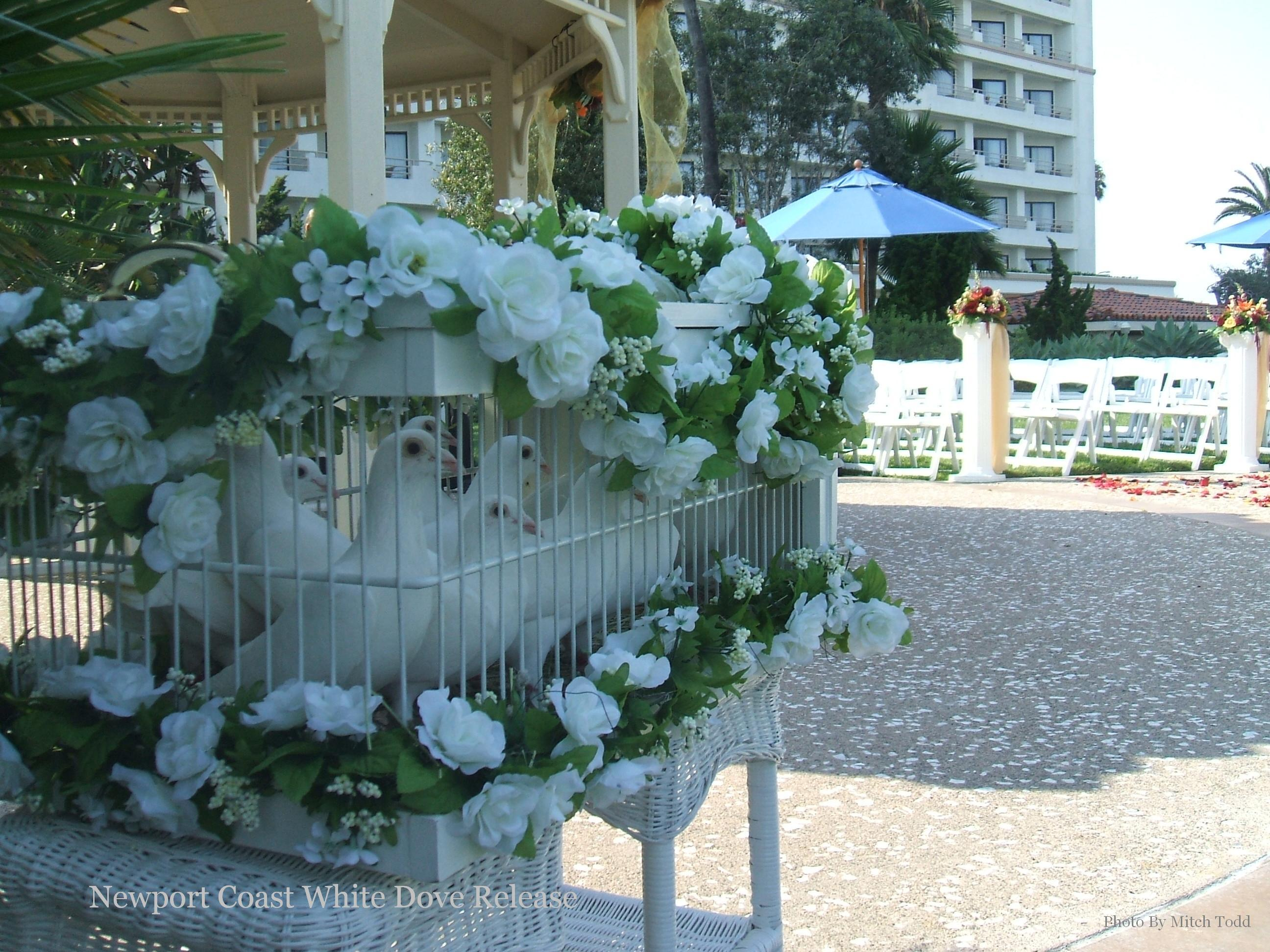 white, Hilton, Doves, Hb