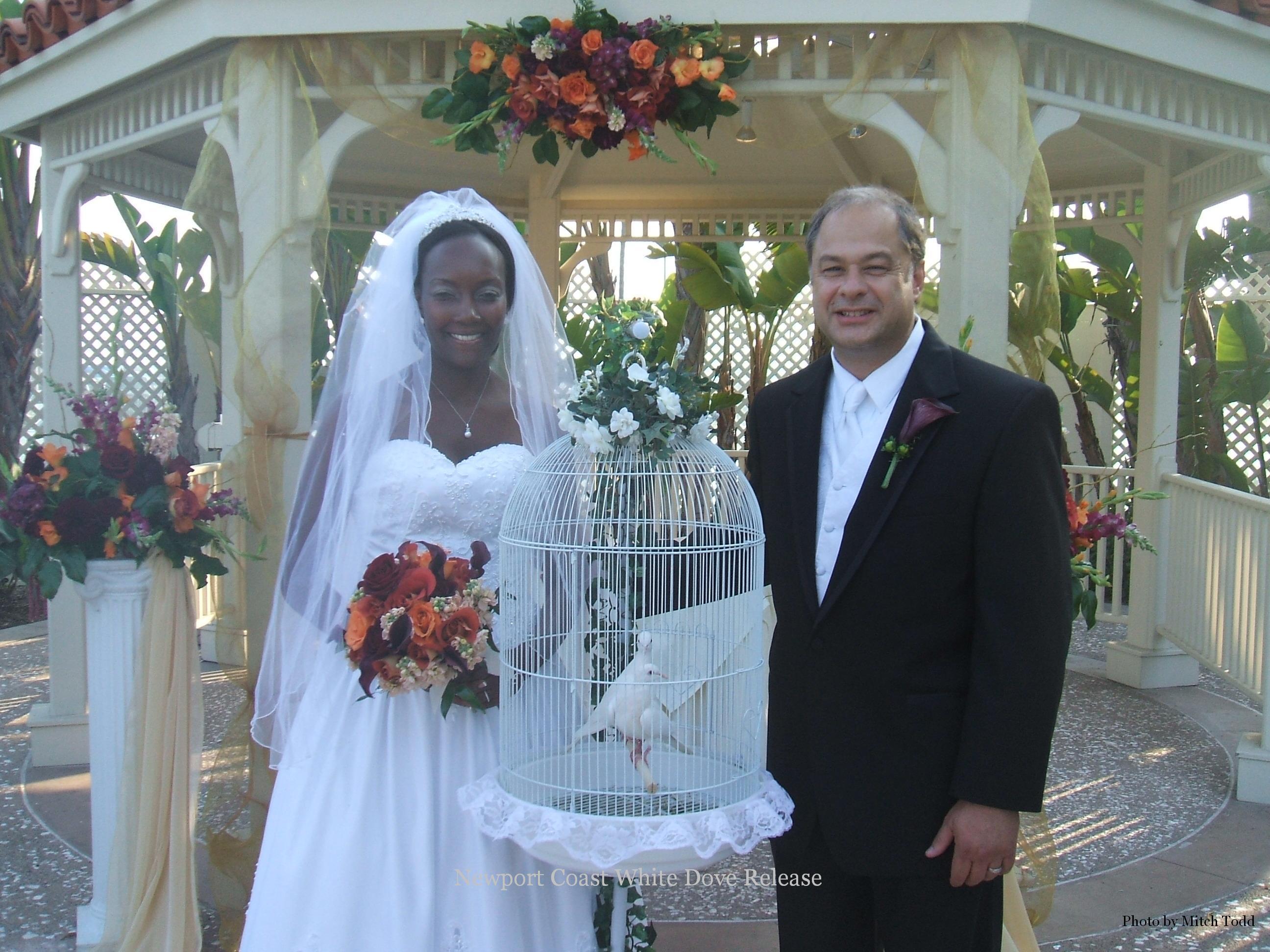 white, Wedding, Dove