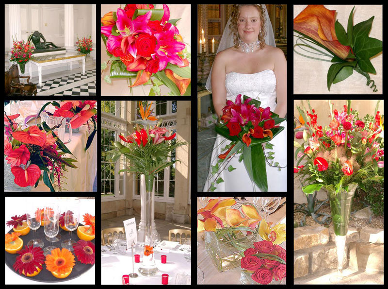 orange, Lily, Cala, Scheme, Colour