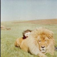 Adventure, Lion, Exotic, Africa, All about honeymoons, Safari
