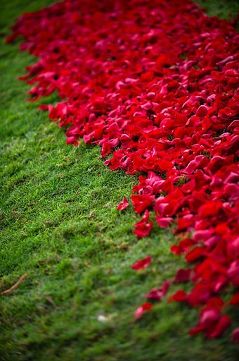 Destinations, red, Hawaii, Wedding, Tropical, Maui, Aisle, Flower petals