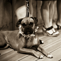 Ceremony, Flowers & Decor, Flower, Girl, Ring, Bridesmaid, Dog, Bearer, Hannahelaine photography, Boxer, Leash