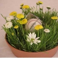 Centerpiece, Baseball