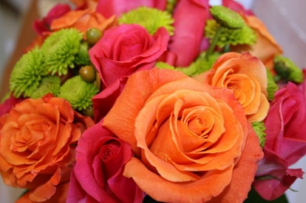 orange, pink, Bouquet, Rose
