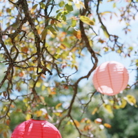 Flowers & Decor, Decor, Destinations, pink, North America, Wedding, Napa, Dogwood, Napa valley, Paper lanterns