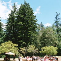 Ceremony, Flowers & Decor, Destinations, pink, North America, Wedding, Napa, Dogwood, Napa valley
