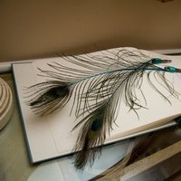 Beauty, Feathers, Guest book, Peacock, Album, Pens