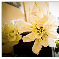 Flowers & Decor, white, Flowers, Lily, Cala, Mieng saetia photography