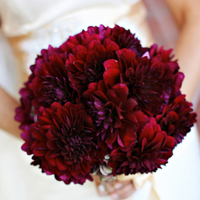 Flowers & Decor, burgundy, Flowers, Dahlia