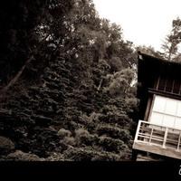 Engagement, Hakone gardens, Saratoga