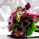 1375031941_small_thumb_7f518f956cf1acfa23a6541ce4f6169e