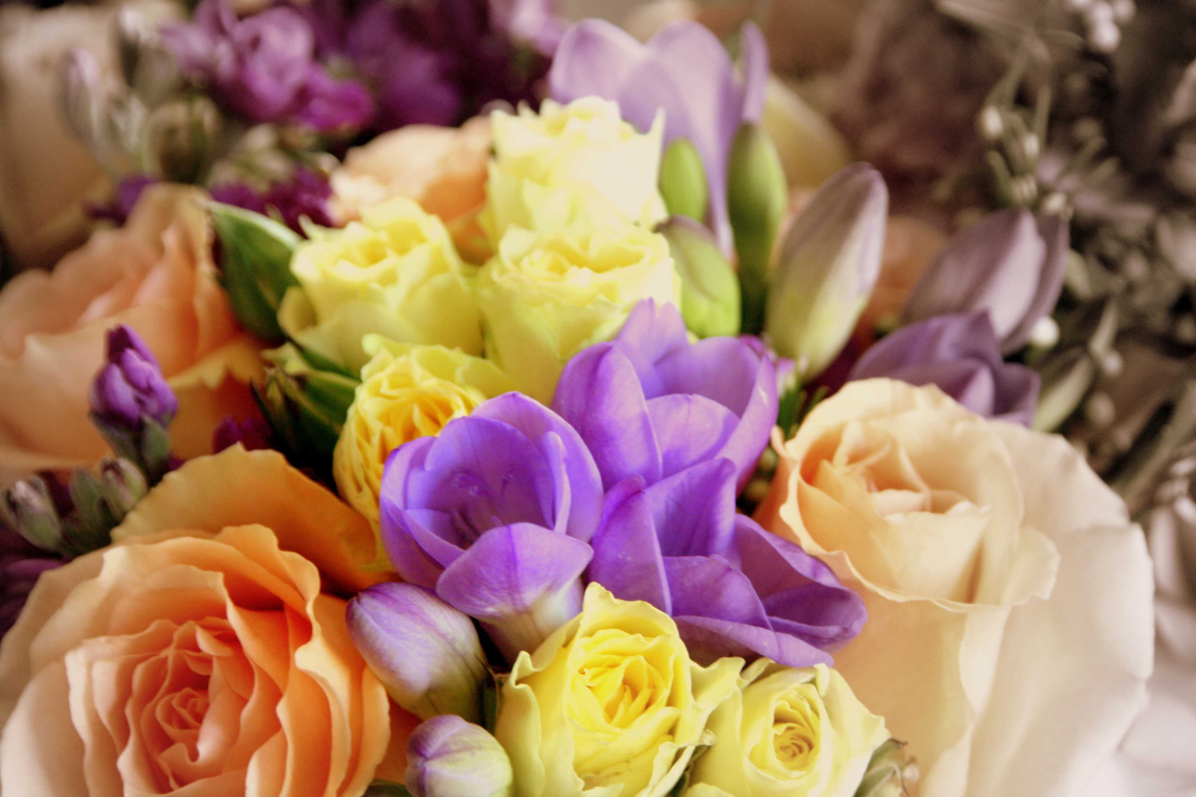 Flowers & Decor, yellow, purple, blue, Bride Bouquets, Flowers, Roses, Bouquet, Peach, Color, Sepia, K mycia photography