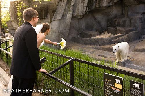 Bride, Groom, Wedding, Zoo, Animals, Brookfield, Brookfield zoo