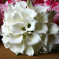Flowers, Bridesmaids, Moh_bouquet, Flowers & Decor, Bridesmaid Bouquets, Fashion, Bridesmaids Dresses, Flower Wedding Dresses