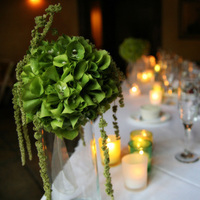 Flowers & Decor, Decor, green, Centerpieces, Flowers, Centerpiece, Head table, Bells of ireland