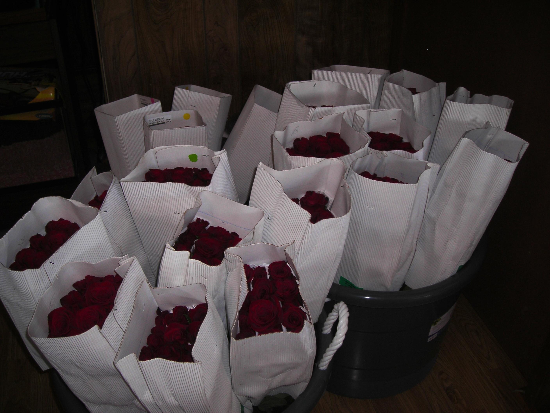 Roses, Sams