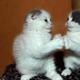 1375038635 small thumb bbe31fef16e27030c571c3caa59b1fd3