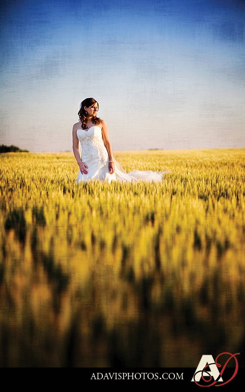 Wedding Dresses, Fashion, dress, Portrait, Wedding, Bridal, Wheat, Field, Dallas, Allison davis photography