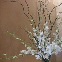 Flowers & Decor, Centerpieces, Flowers, Centerpiece, Orchid, Branches
