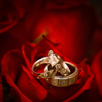 Registry, red, gold, Platinum, Bed, Bedding, Roses, Rings, Wedding, Ring, Rose, Fowers, Allen taylor photography
