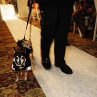 Ceremony, Flowers & Decor, Dog, Dogs, Devon john photography