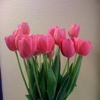 Reception, Flowers & Decor, Bridesmaids, Bridesmaids Dresses, Cakes, Fashion, pink, green, cake, Bridesmaid Bouquets, Flowers, Tulips, French, Flowerbudcom, Flower Wedding Dresses