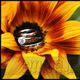 1375043080 small thumb e8db29d25c2794f1ee06ee74c69947ec