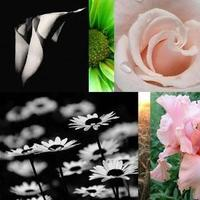 Inspiration, Flowers & Decor, white, pink, green, black, Flowers, Board