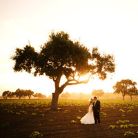 Ceremony, Reception, Flowers & Decor, Wedding Dresses, Fashion, yellow, brown, dress, Halberg photographers