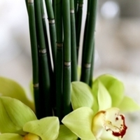 Reception, Flowers & Decor, green, Centerpieces, Flowers, Centerpiece, Cymbidium, Libbys flower shop