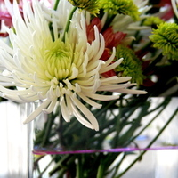Flowers & Decor, white, pink, green, Centerpieces, Flowers, Centerpiece, White orchid soiree