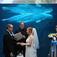 Destinations, white, black, Wedding, Destination, Aquarium, Whale, Ernest adams, justice of the peace