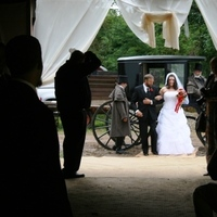 Inspiration, Flowers & Decor, Wedding Dresses, Rustic Vineyard Wedding Dresses, Fashion, white, dress, Rustic, Flowers, Wedding, Board, Horse, Carriage, Coach, Horses, Ernest adams, justice of the peace, Coachmen, rustic wedding dresses, Flower Wedding Dresses