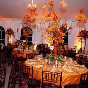 Reception, Flowers & Decor, orange