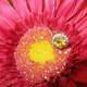 1375046016 small thumb c086130937aea27da2d74f90db795108