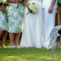 Ceremony, Flowers & Decor, Wedding Dresses, Fashion, white, green, dress, Outdoor, Party, Bridal, Dog