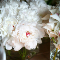 Flowers & Decor, white, yellow, Flowers, Sweet, Romance, Person killian photography