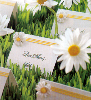 Reception, Flowers & Decor, white, yellow, orange, green, silver, gold, Placecard, Daisy, Place card, Favors by lisa