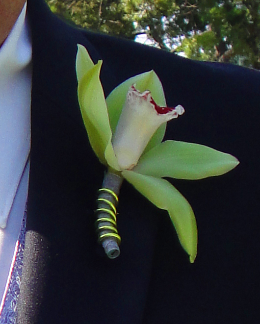 Flowers & Decor, green, Boutonnieres, Flowers, Orchid, Boutonniere, Dees petals