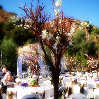 Flowers & Decor, white, green, Flowers, Roses, Branches, Hydrangeas, Manzanita, Salmon, Dees petals