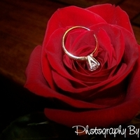 Flowers & Decor, Jewelry, white, yellow, red, gold, Engagement Rings, Flowers, Ring, Rose, Photography by lori