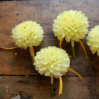 Flowers & Decor, yellow, Boutonnieres, Flowers, Boutonniere, Studio choo