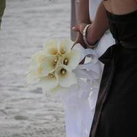 Flowers & Decor, white, Bride Bouquets, Flowers, Bouquet, Calla, Lilies, Bridal, Bouquets, Tampa, Apple blossoms floral designs gifts