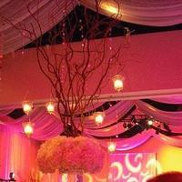 Reception, Flowers & Decor, white, orange, black, silver, Lighting, Flowers, Centerpeices, Apple blossoms floral designs gifts