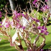 Reception, Flowers & Decor, pink, purple, Tree, Wishing